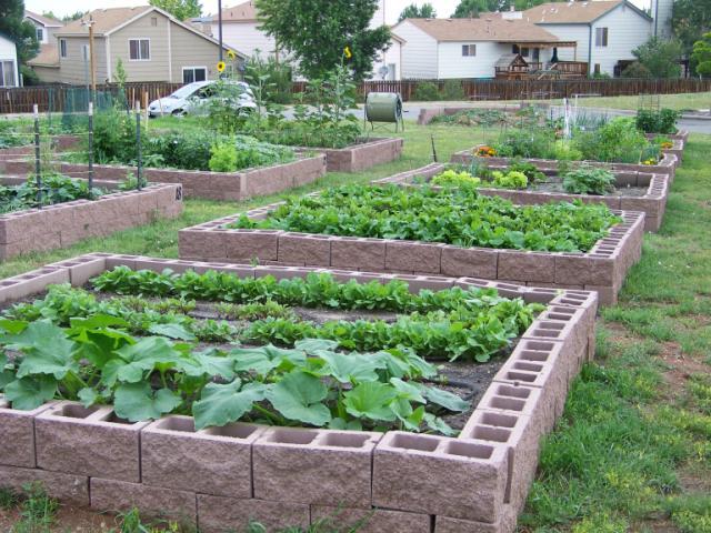 Community Vegetable Gardens Photo Gallery Feeding Many